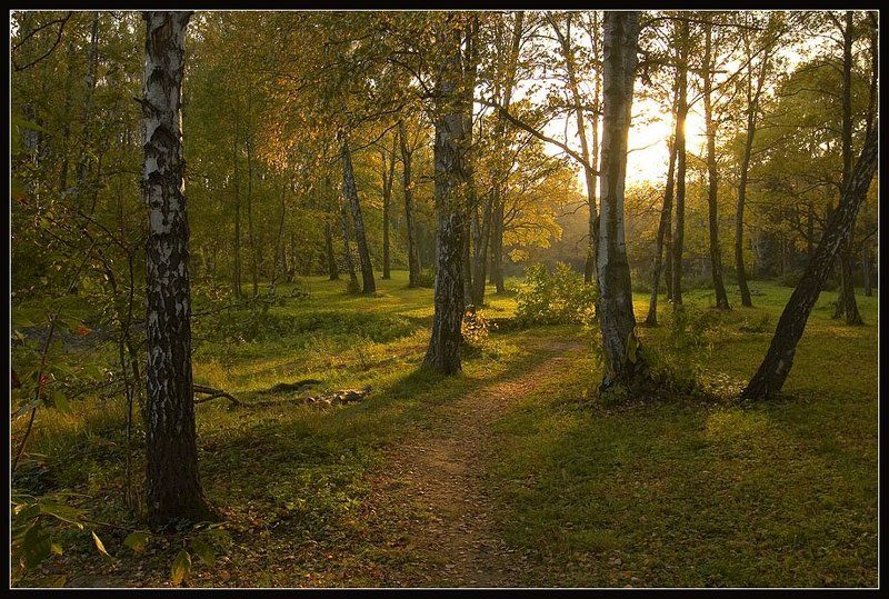 лес, солнце, осень photo preview