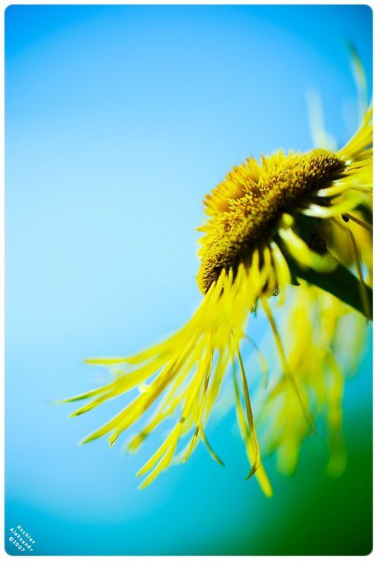 цветок, солнце, природа, красота Sun for youphoto preview