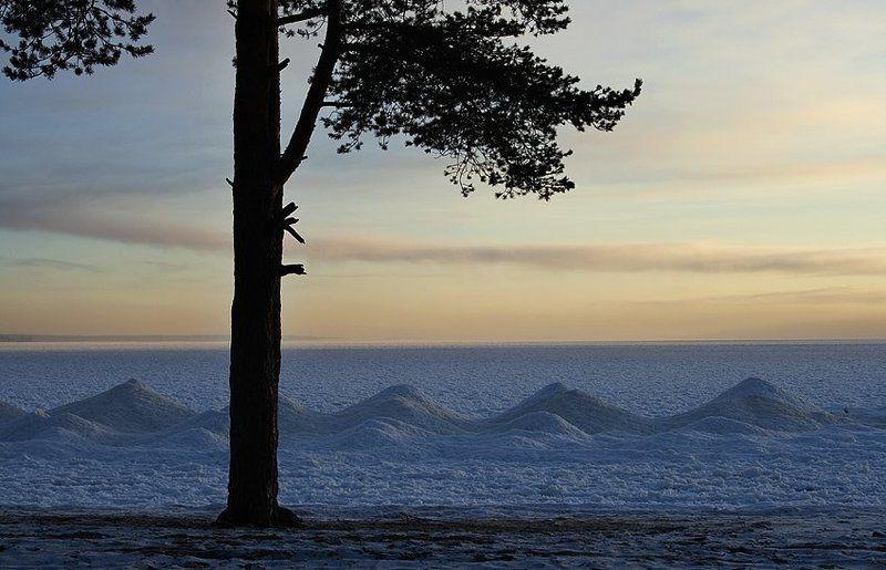онега, карелия, петрозаводск, пляж, сосна, снег, небо Онегаphoto preview