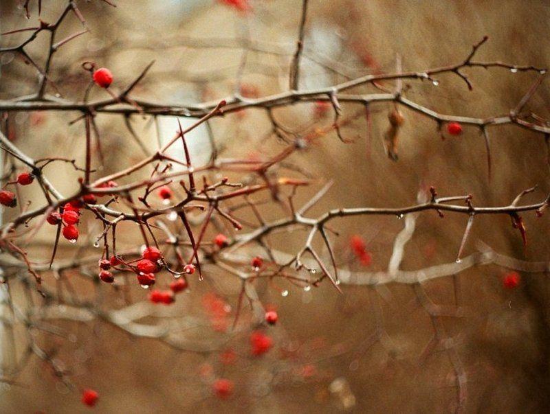 красный, осень, капли photo preview