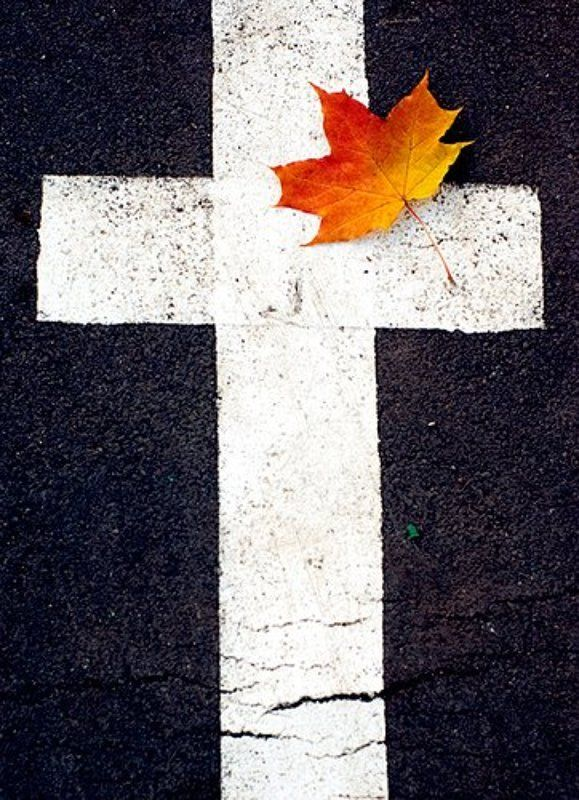 лист, крест photo preview