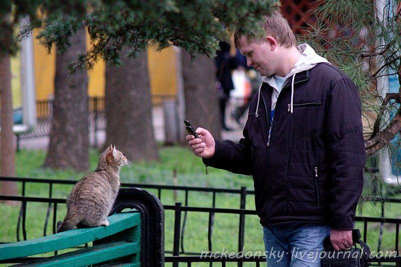 жанр, алушта, крым, человек, кот photo preview