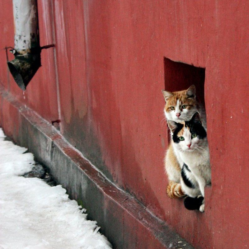 кот, подвал, окно photo preview