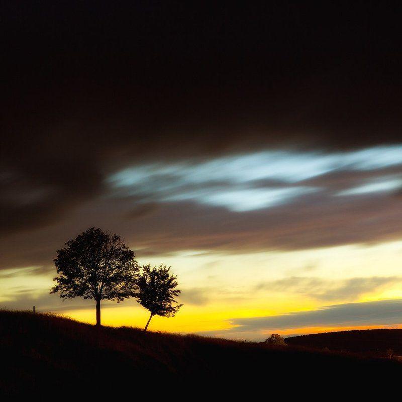 дерево, закат photo preview