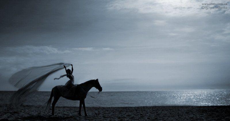 лошади, конный спорт photo preview