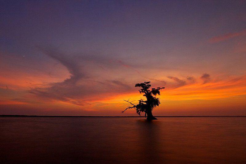 louisiana, lake, tree, swaps, sunset photo preview