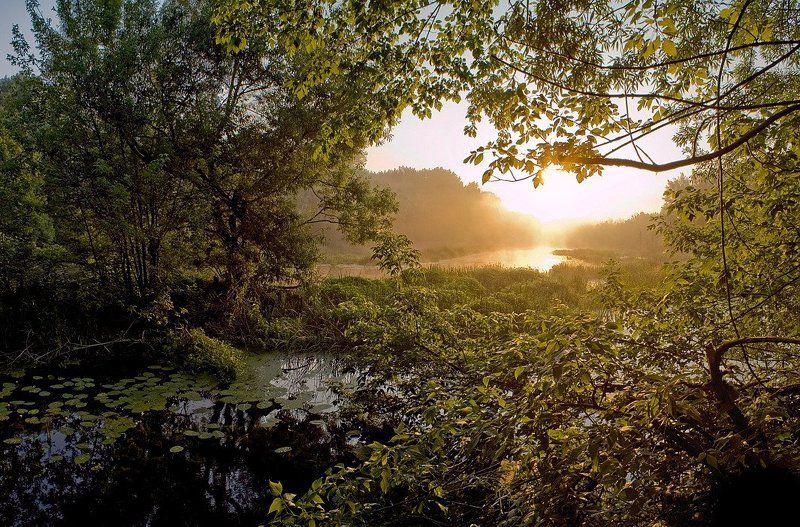 утро, рассвет, река, туман, восход photo preview