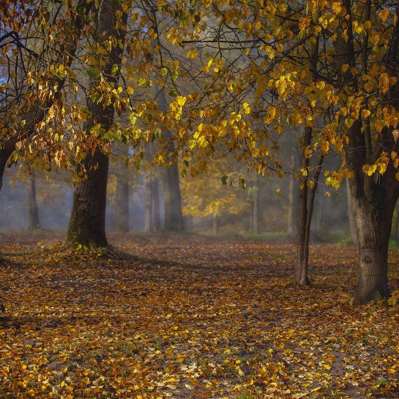 осень, парк, листва, туман Осенний пейзажphoto preview