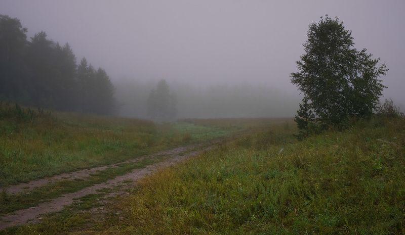 туман, лес Первые признаки осениphoto preview