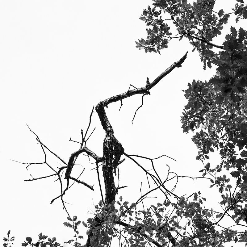 bnw, #black and white, nature, woods, natural forms,  Untitled photo preview
