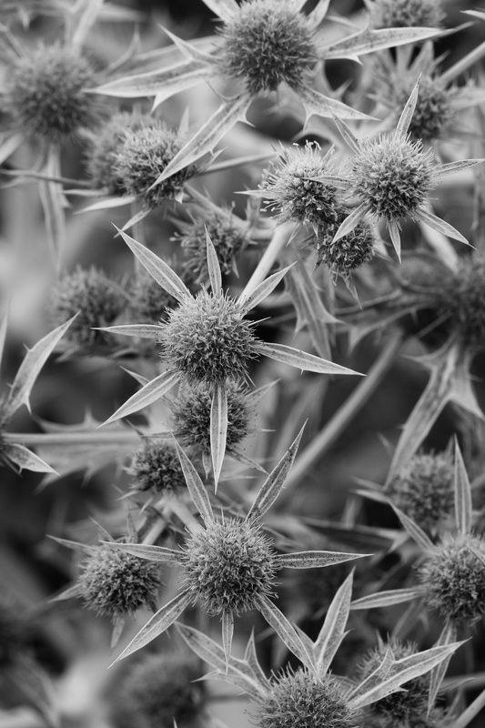 Plantas , natura, b&w,  Plantas 2photo preview