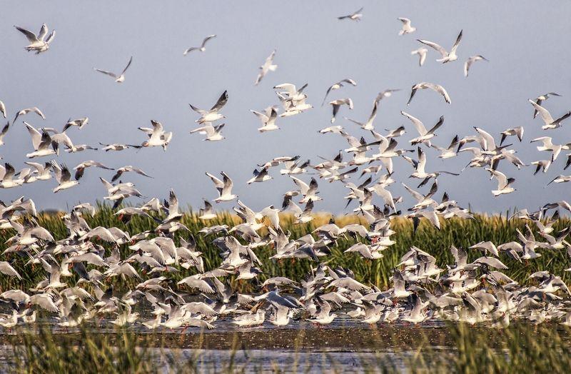 заповедник, множество птиц,неописуемое зрелище. Птичий переполохphoto preview
