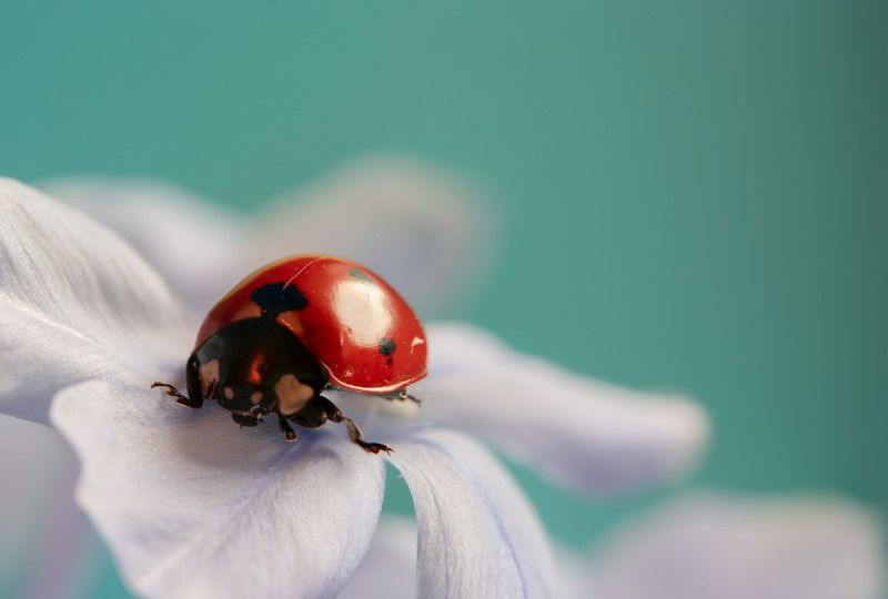 insect, macro, beauty, nature, lovely, bokeh, nature, natural, close-up Ladybugphoto preview