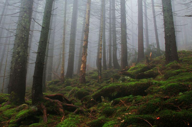 В заповедном лесуphoto preview