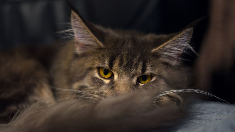 животные, котик Под присмотромphoto preview