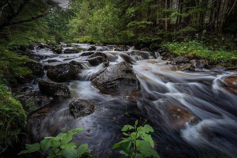 nisi filters, long exposure, landscape, nature, green, forest, river, water, nikon The Riverphoto preview