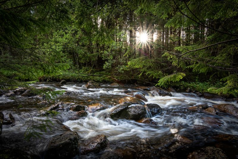 nisi filters, landscape, long exposure, forest, river, sun, green, water Last sun raysphoto preview