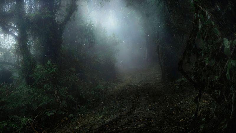 бали, индонезия, джунгли, туман, тропа Тропический райphoto preview