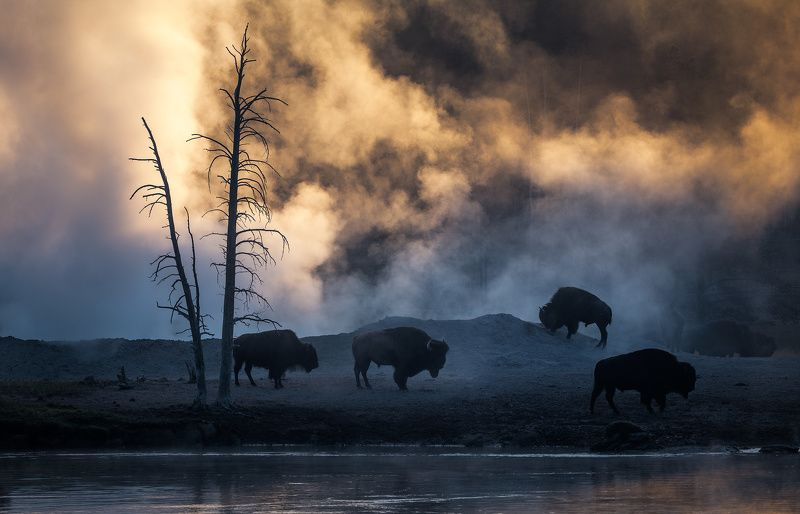 Yellowstone Living Landscapephoto preview