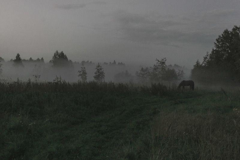 Туман и коньphoto preview