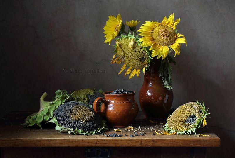 подсолнухи, семечки, керамика Подсолнухиphoto preview