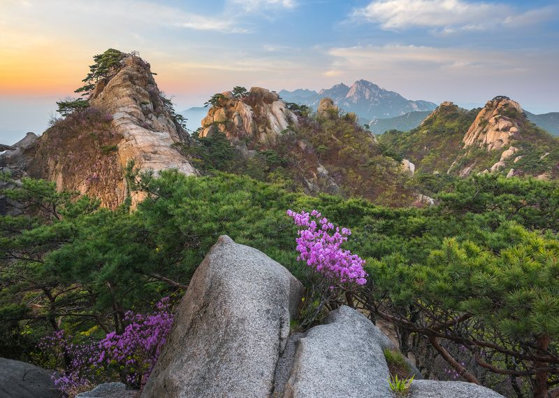 Flowers blooming on the rocksphoto preview