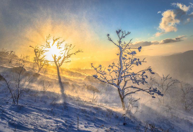 Приморье, Приморский край, зима,  метель, пурга Зимняя сказкаphoto preview