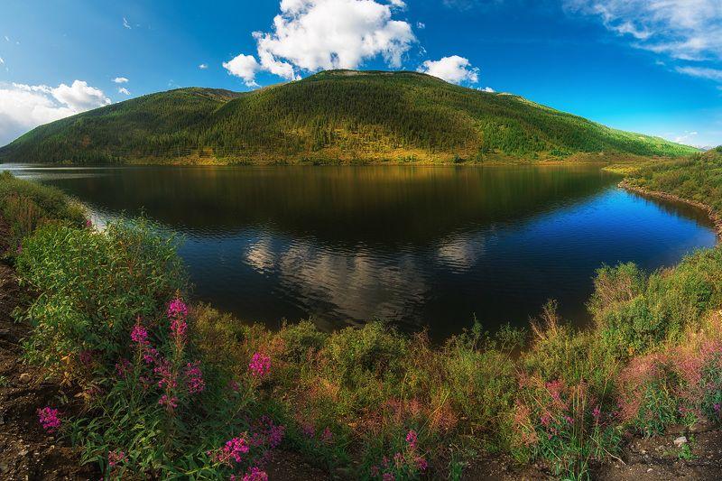 алтай, мертвоеозеро Мертвое озероphoto preview