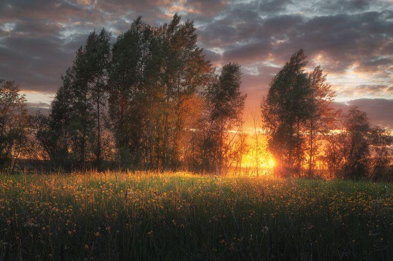 закат, тополь, луто, луг, поле, вечер, роща Тополиный пухphoto preview