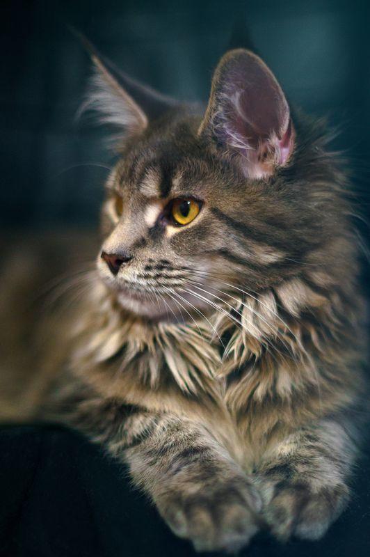 портрет, sony Тренируйся на кошках!photo preview