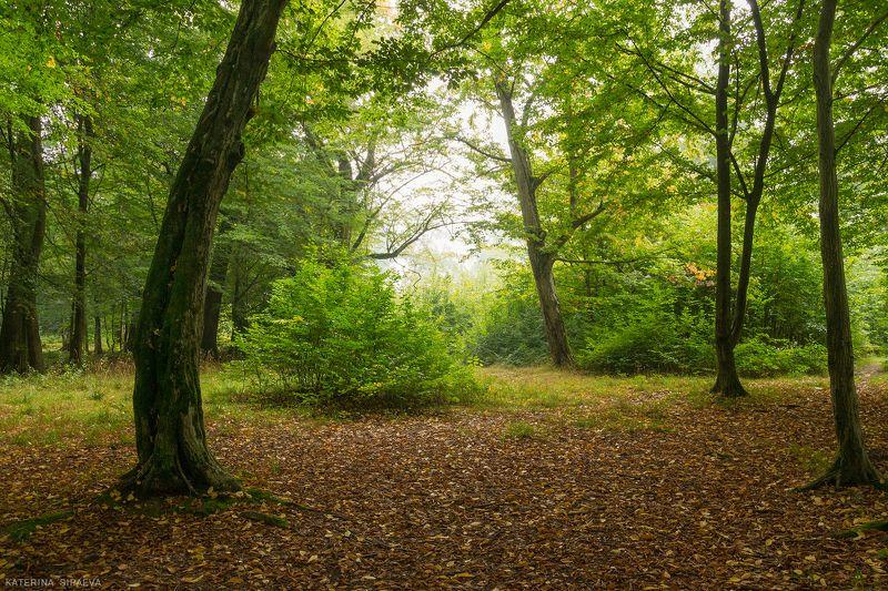 природа, лес, осень, пейзаж Осени первые денькиphoto preview