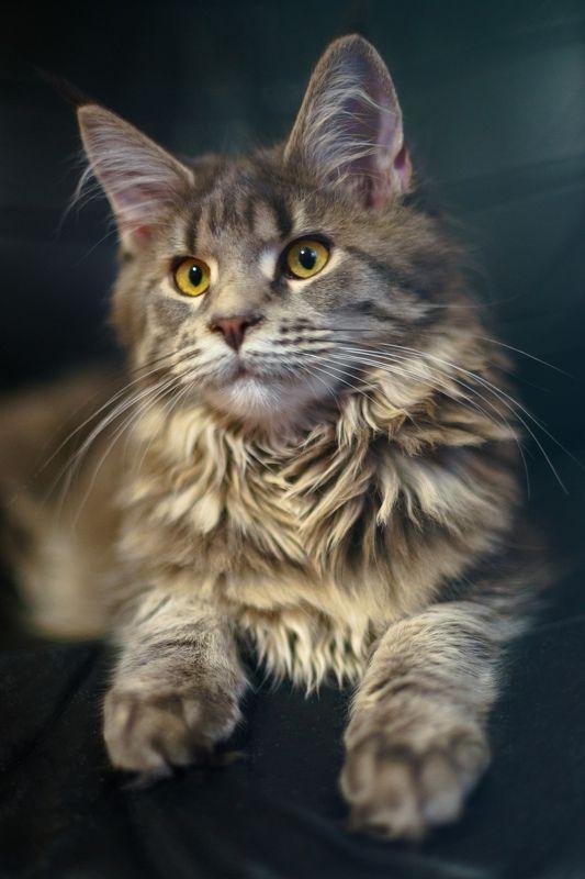 портрет, кошка, sony Котопортретphoto preview