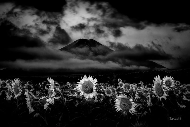 fuji,mountain,closer,japan,sunflower,cloud,amazing, Think at dawnphoto preview