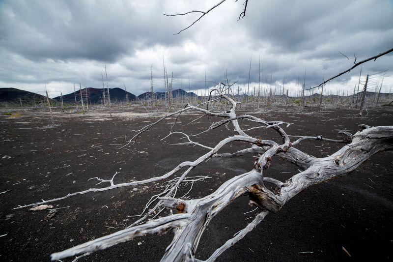 Камчатка, Россия Мертвый лес Толбачикаphoto preview