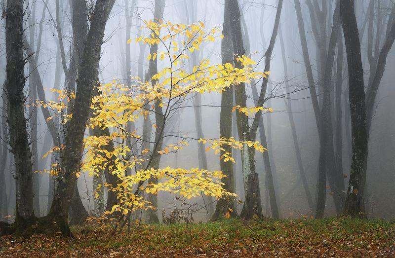 пейзаж,природа Последние краски осениphoto preview
