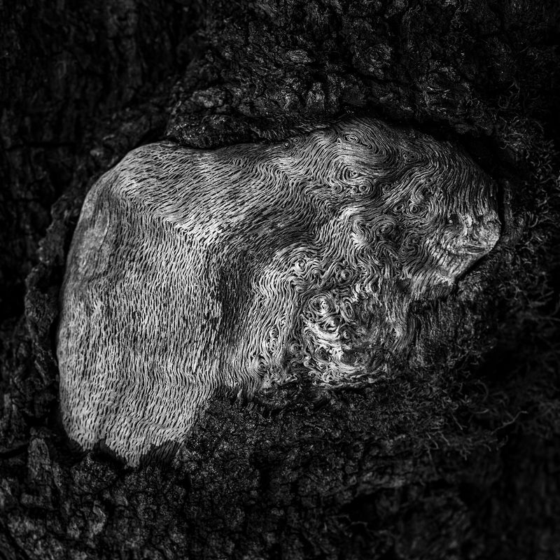 nature, forest, black and white, tree, abstract,  The Maze photo preview