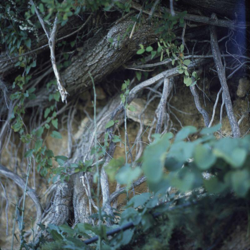 plants, nature, film, slide Rootsphoto preview
