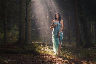 В заколдованном лесу