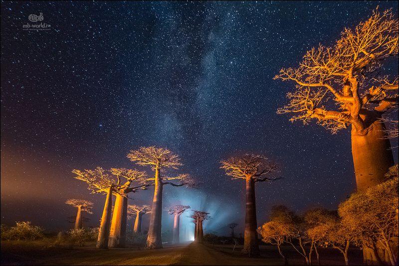 Мадагаскар, баобабы, ночь, фототур Ночь в долине баобабовphoto preview
