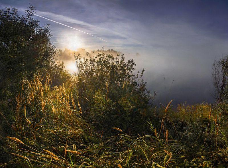утро, рассвет, свет, осень, вода, лес, озеро, солнце Утро начинается с рассветаphoto preview