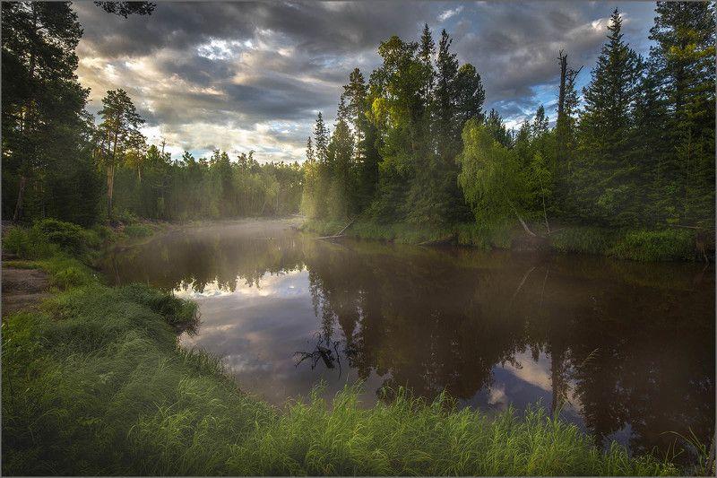 югра, лес, тайга, река, После ливняphoto preview