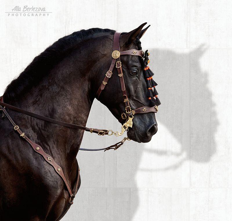лошадь,  horse ***photo preview