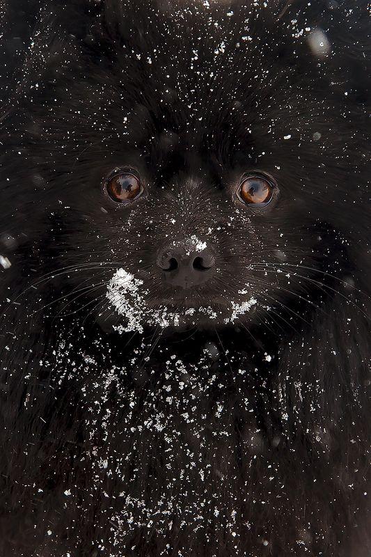 друг, собака, черный, зима, глаза Другphoto preview