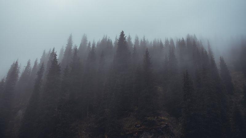 лес, пейзаж, туман, горы, природа, ущелье, облака, погода Стенолесphoto preview