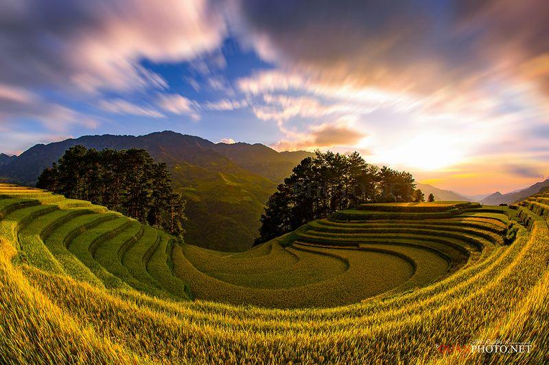 quanphoto, landscape, nature, sunset, sundown, rice, terraces, fields, valley, farmland, agriculture, trees, harvest, golden, rural, mucangchai, vietnam Golden Rice Terraced sunset in Vietnamphoto preview