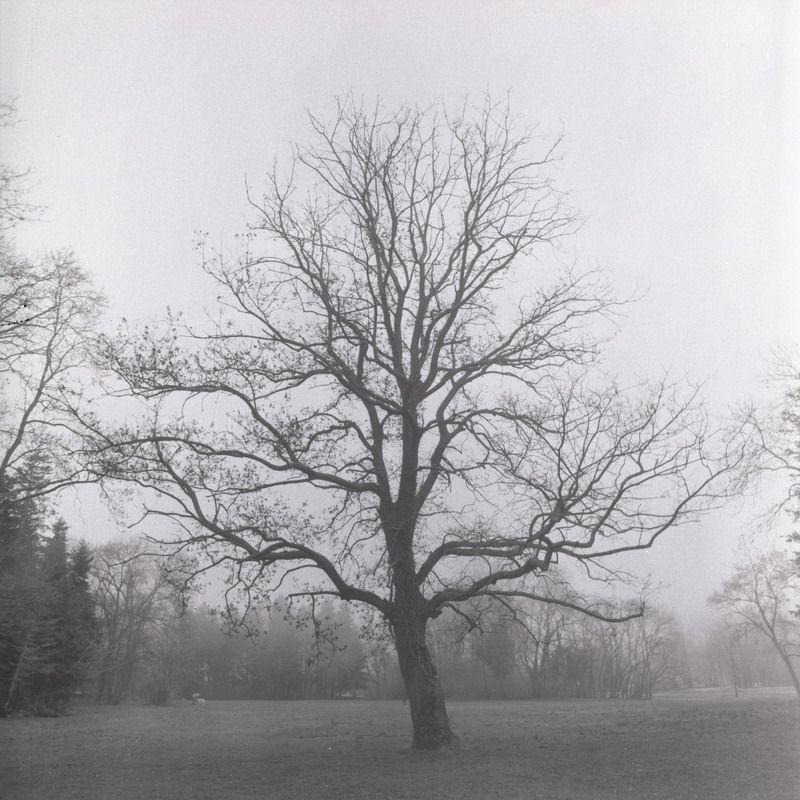 film, пленка, 6x6, средний, формат, middle, format Parkphoto preview