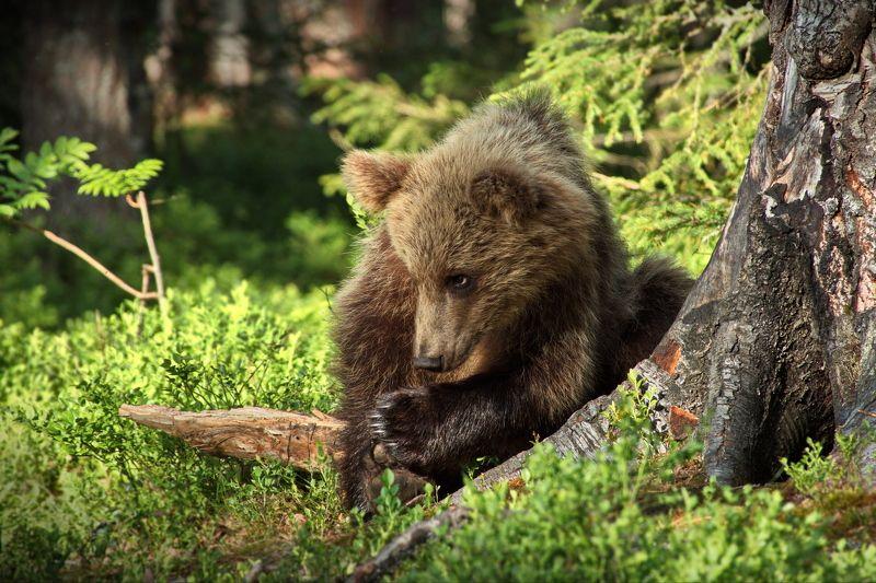 Медвежьи истории - 3photo preview
