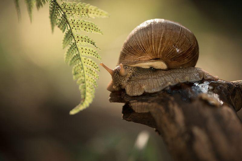макро, улитки, лес, папоротник В осеннем лесуphoto preview