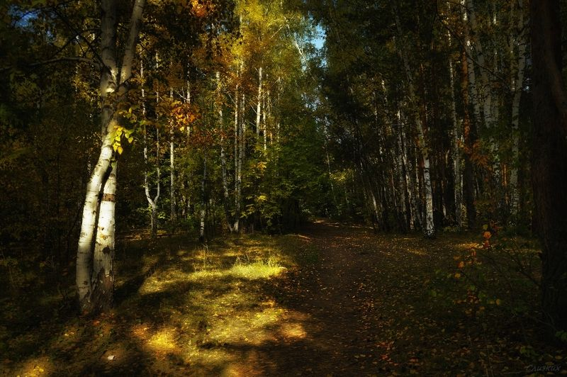 пейзаж,лес,тропинка,лес,берёза,сентябрь Осенний денёк  в лесуphoto preview