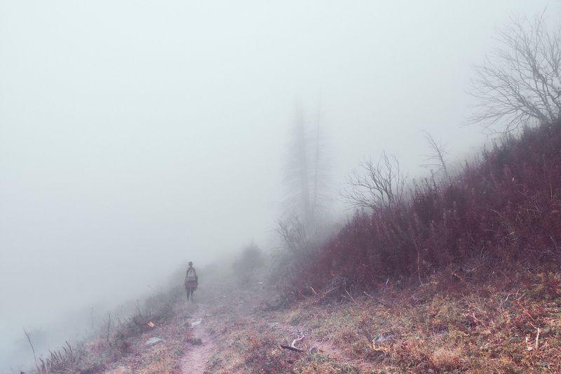 горы, лес, природа, туман, дорога, пейзаж, непогода Как в старой сказкеphoto preview